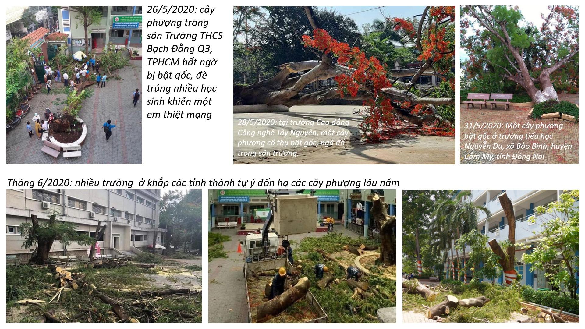 """Thư mời tham dự hội thảo """"Vấn đề cây xanh đô thị thành phố Hồ Chí Minh"""""""